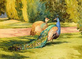 Mildred Anne Butler RWS RUA (1858-1941), Peacocks at Morgan O'Driscoll Art Auctions