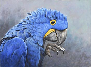 Alan M. Hunt, Hyacinth Macaw (2008) at Morgan O'Driscoll Art Auctions