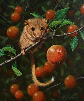 Steve Burgess, Harvest Mouse at Morgan O'Driscoll Art Auctions