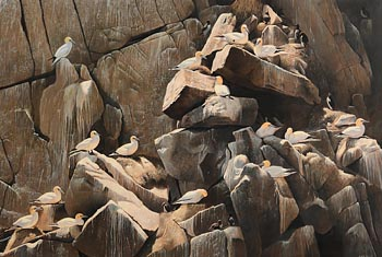 David Miller, Gannet Colony, Great Saltee at Morgan O'Driscoll Art Auctions
