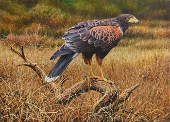 Alan M. Hunt, Bird of Prey (2015) at Morgan O'Driscoll Art Auctions