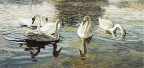 Ronan Goti, The Swan Family (2013) at Morgan O'Driscoll Art Auctions