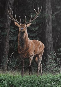 Jason O'Ceannobhain, Majestic Red at Morgan O'Driscoll Art Auctions