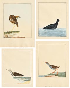 William Lewin, Collection of 4 Avian Studies at Morgan O'Driscoll Art Auctions
