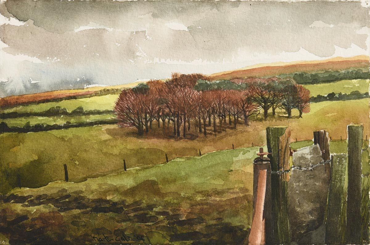Martin Gale, Copse, Co. Wicklow (2005) at Morgan O'Driscoll Art Auctions